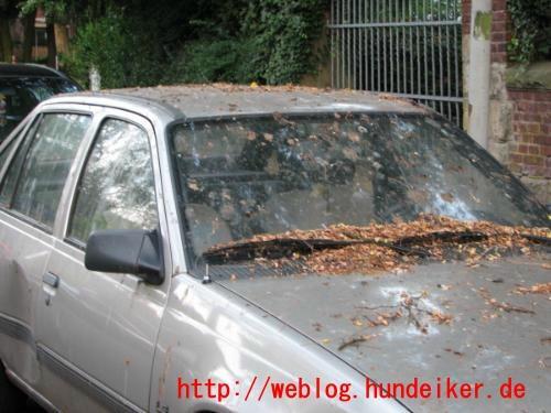 Von Vögeln vollgekacktes Automobil
