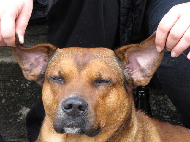 Bruno der Hund