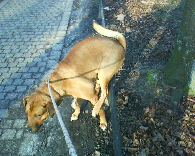 Bruno kackt auf dem Donnerbalken.