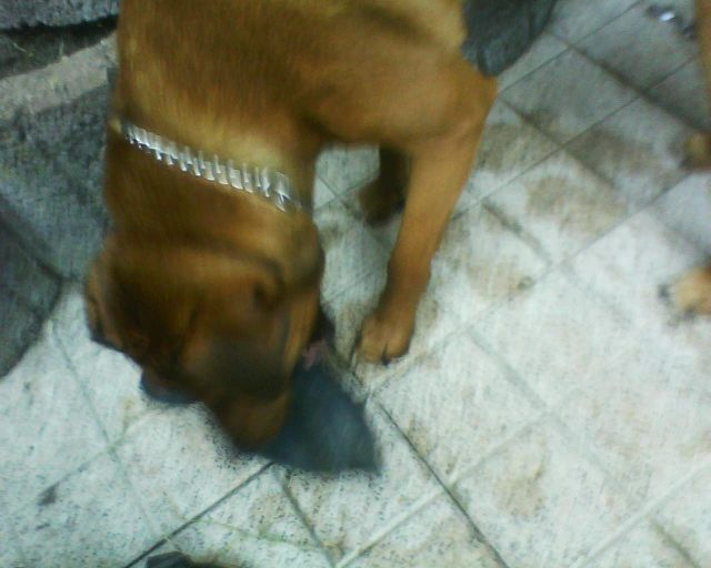 Bruno jagt eine Plastikente.