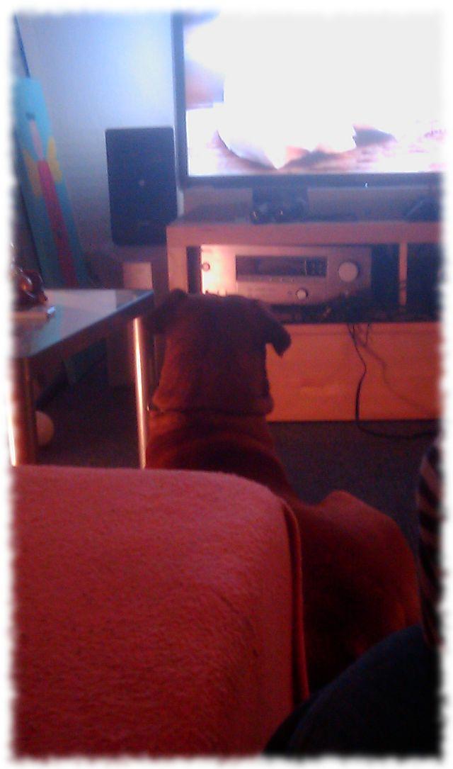 Fernseherhund.