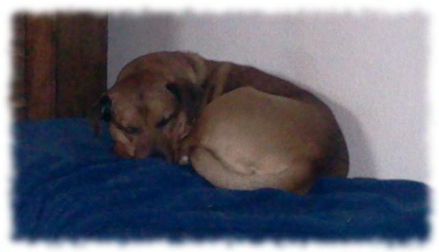 Schlafender Hund.