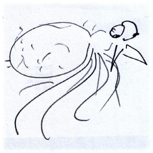 Sehr unvollkommen gezeichnete Spinne.