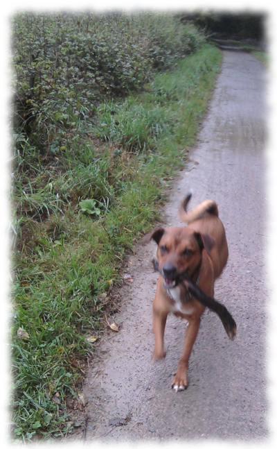 Teilzeithund Bruno mit Stock.
