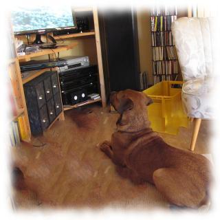 Teilzeithund Bruno schaut Zombiefilm mit Schafen.