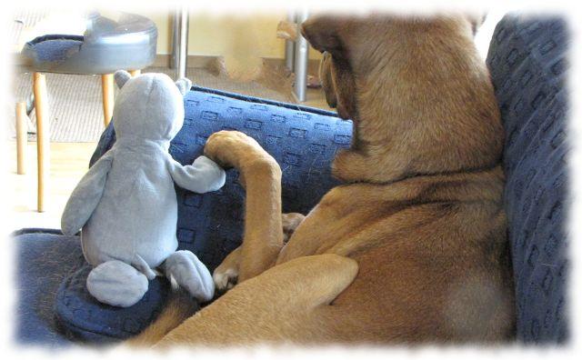 Bruno (Hund) Hand in Hand mit Nils (Stoffnilpferd)