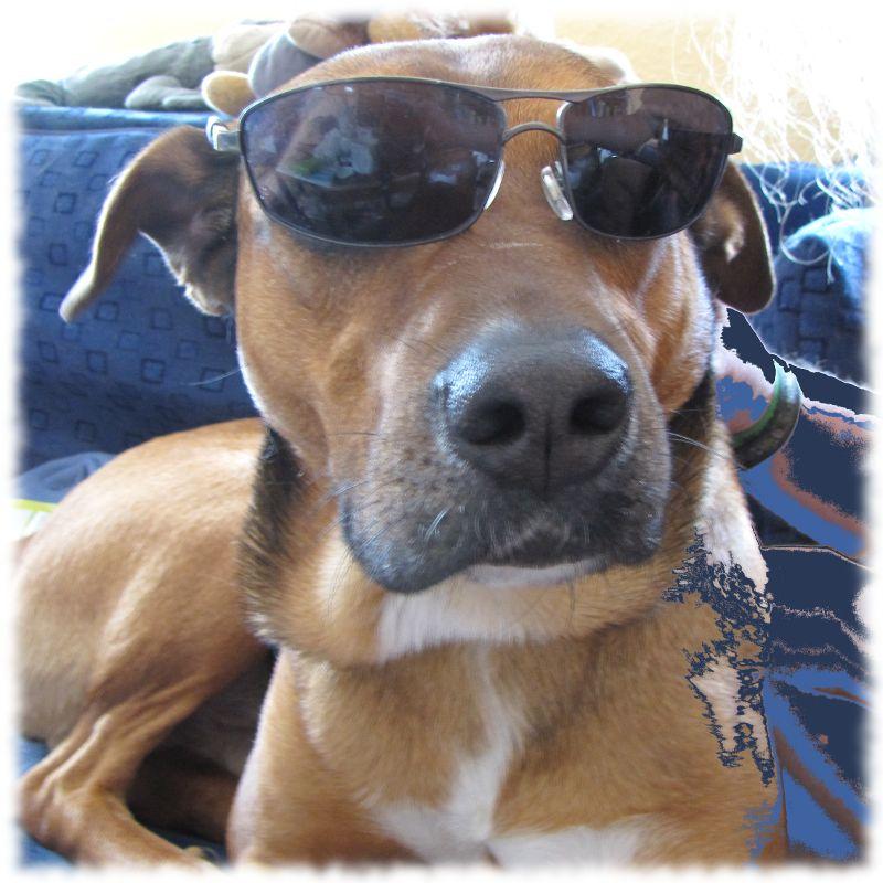 Hund Bruno mit Sonnenbrille.