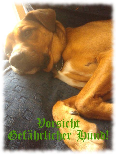 Bruno-Hund, sehr kuschelgefährlich!