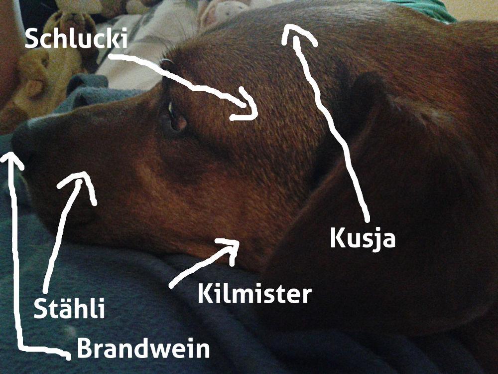 Anatomie des Brunokopfes, vergleiche Text.