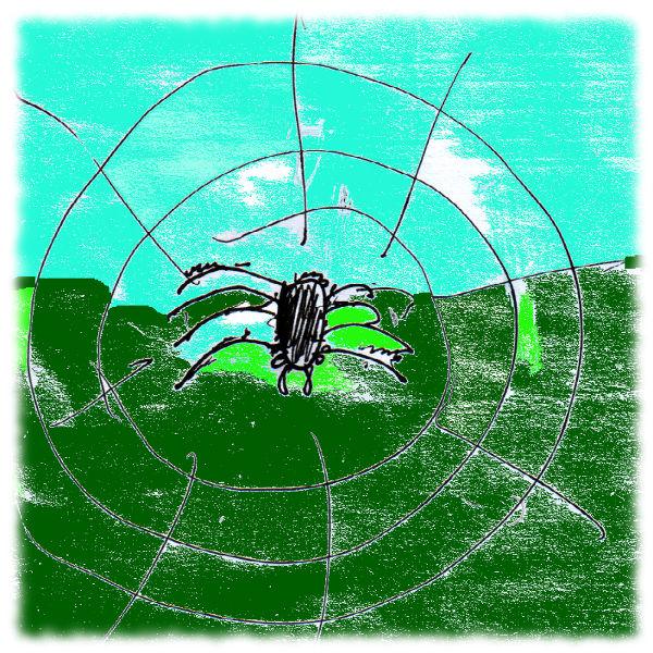 Spinne im Netz.