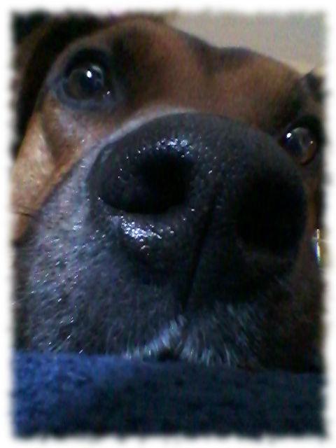 Hundeschnauze (Bruno natürlich).