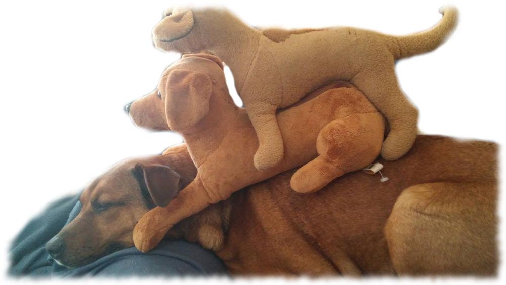 Bruno mit zwei Plüschhunden obendrauf.