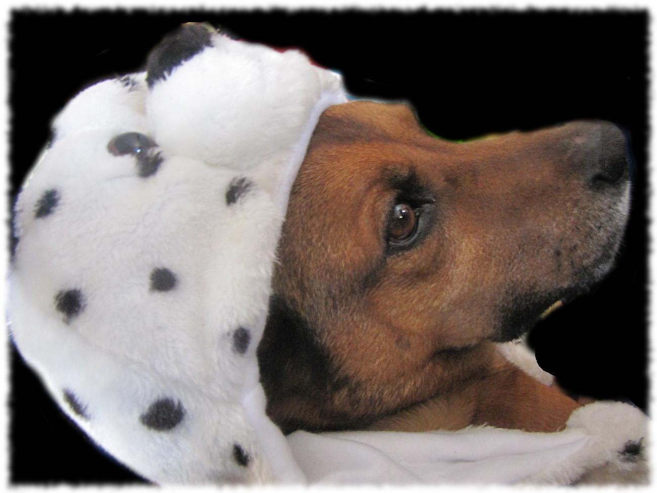 Hund mit einer scheußlichen Tiermütze, an Kitsch kaum zu überbieten...