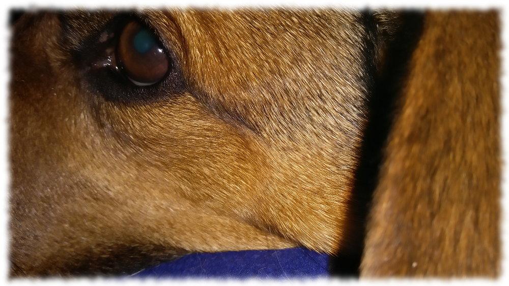 Hund Bruno mittlerweile wieder ganz entspannt.