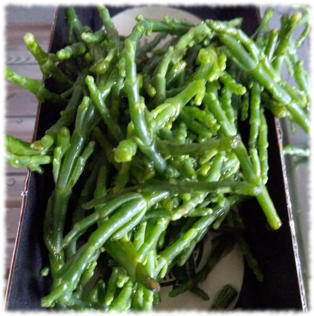 Queller (Salzwiesenpionierpflanze)