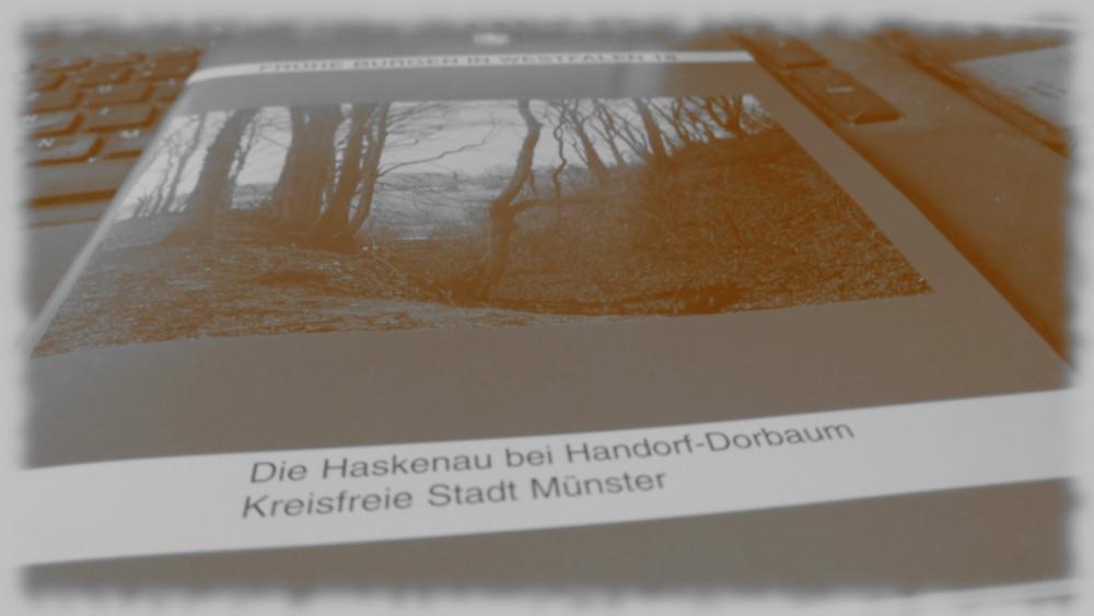Cover von: Frühe Burgen in Westfalen 18 - Die Haskenau bei Handorf Dorbaum.