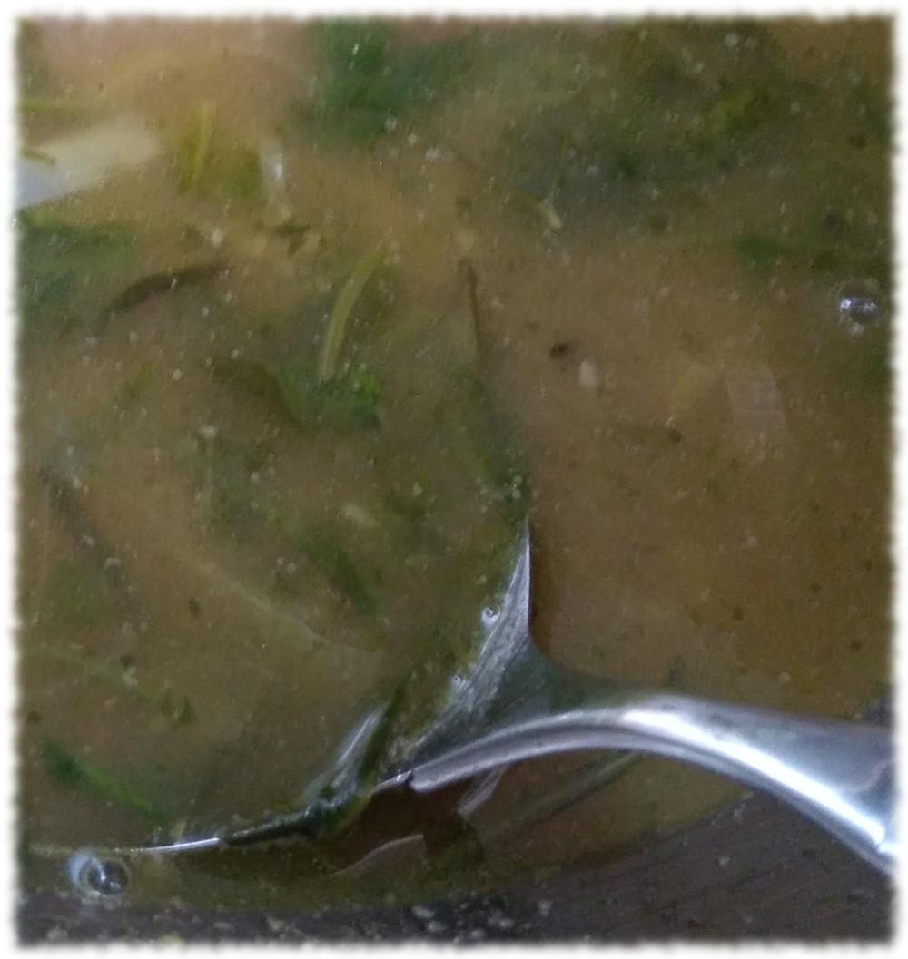 Wenig ansprechendes Foto der eigentlich sehr leckeren Suppe.