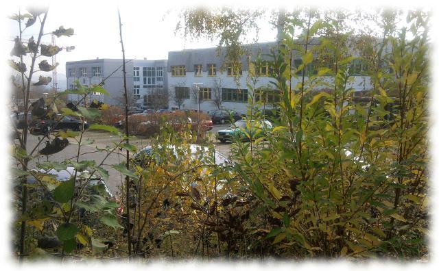 Unser Klinikgebäude eingerahmt von Gestrüpp sieht gar nicht so übel aus, wie auf den ersten Blick.